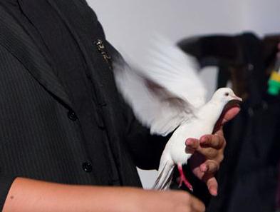 Dove Magic